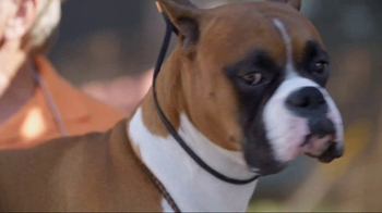 American Kennel Club TV Spot, 'The Right Breed' - Thumbnail 3
