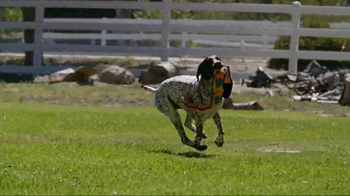 American Kennel Club TV Spot, 'The Right Breed' - Thumbnail 4