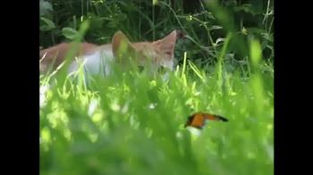 Kitty Chase TV Spot, 'Natural Instincts' - Thumbnail 1
