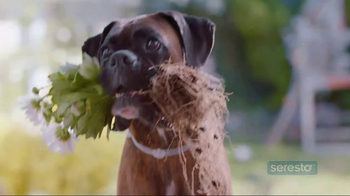 Seresto TV Spot, 'Whatever Your Dog Brings Home' - Thumbnail 1