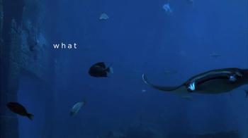 Atlantis TV Spot, 'What Is Wow: Manta Ray' - Thumbnail 1