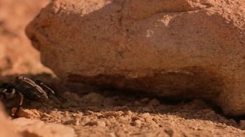 Ted Cruz for President TV Spot, 'Scorpion' - Thumbnail 4