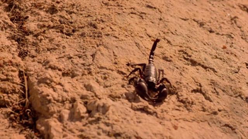 Ted Cruz for President TV Spot, 'Scorpion' - Thumbnail 5