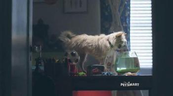 PetSmart November Weekend Sale TV Spot, 'Pet Holiday Treats' Song by Queen