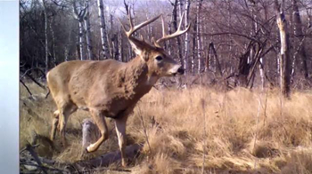 Cuddeback Long Range IR Camera TV Spot, '20 Megapixel Images' - Thumbnail 2