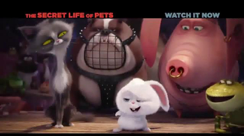 XFINITY On Demand TV Spot, 'The Secret Life of Pets' Song by Macklemore - Thumbnail 3