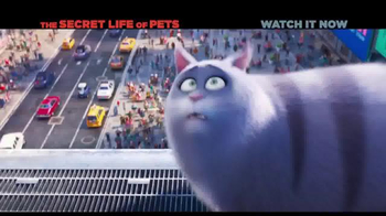 XFINITY On Demand TV Spot, 'The Secret Life of Pets' Song by Macklemore - Thumbnail 7