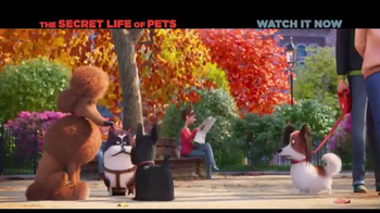XFINITY On Demand TV Spot, 'The Secret Life of Pets' Song by Macklemore - Thumbnail 9