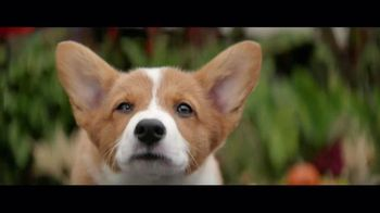 A Dog's Purpose - Alternate Trailer 1