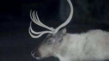 Half Off Paint Sale: Deer thumbnail