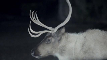 Maaco Half Off Paint Sale TV Spot, 'Deer' - 934 commercial airings