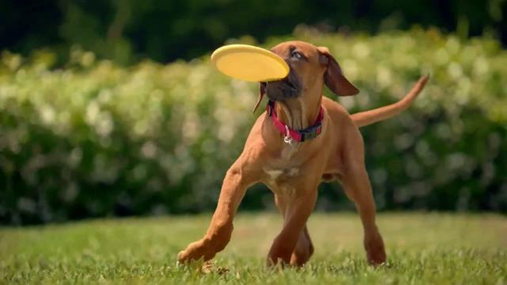 Purina One SmartBlend TV Commercial, 'All in One'