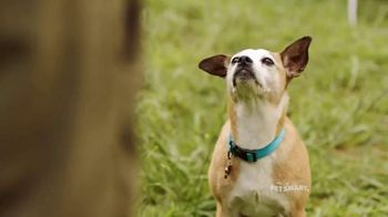 PetSmart TV Spot, 'Frisbee' Song by Queen - 1002 commercial airings