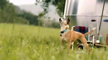 PetSmart TV Spot, 'Frisbee' Song by Queen - Thumbnail 3