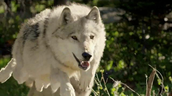 Blue Buffalo BLUE Wilderness TV Spot, 'The Soul of a Wolf' - Thumbnail 2