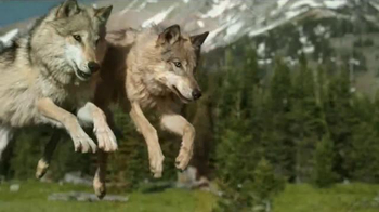 Blue Buffalo BLUE Wilderness TV Spot, 'The Soul of a Wolf'