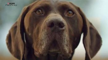 Purina Pro Plan TV Spot, 'Sporting Dogs' - Thumbnail 8
