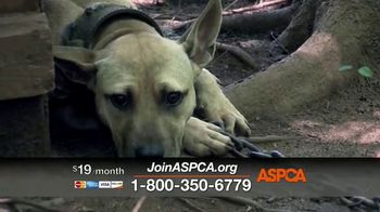 ASPCA TV Spot, 'Can't Escape the Violence' - Thumbnail 7