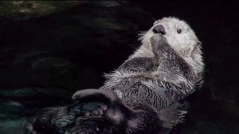 Metro by T-Mobile TV Spot, 'Nutria' canción de Usher [Spanish] - Thumbnail 3