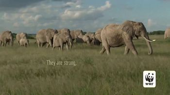 World Wildlife Fund TV Spot, 'Protecting the Elephants' Song by Passenger - Thumbnail 1