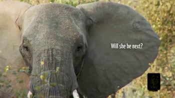 World Wildlife Fund TV Spot, 'Protecting the Elephants' Song by Passenger - Thumbnail 3