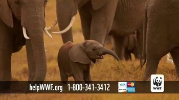 World Wildlife Fund TV Spot, 'Protecting the Elephants' Song by Passenger - Thumbnail 5