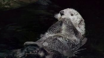 Metro by T-Mobile TV Spot, 'Otters: Hot Spring' Song by Usher - Thumbnail 2