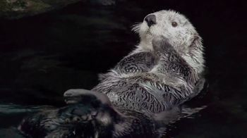 Metro by T-Mobile TV Spot, 'Otters: Hot Spring' Song by Usher