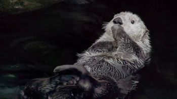 Metro by T-Mobile TV Spot, 'Otters: Hot Spring' Song by Usher - Thumbnail 4