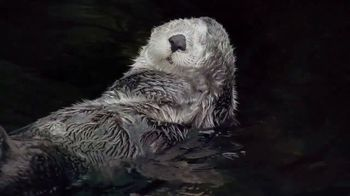 Metro by T-Mobile TV Spot, 'Otters: Hot Spring' Song by Usher - Thumbnail 6