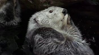 Metro by T-Mobile TV Spot, 'Otters: Hot Spring' Song by Usher - Thumbnail 7