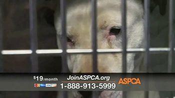 ASPCA TV Spot, 'The Gift of Life' - Thumbnail 7