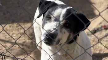 ASPCA TV Spot, 'The Gift of Life' - Thumbnail 2