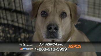 ASPCA TV Spot, 'The Gift of Life' - Thumbnail 4