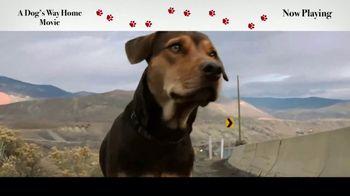 A Dog's Way Home - Alternate Trailer 33