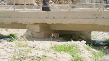 Nowzad TV Spot, 'Winning the War for Animals' - Thumbnail 3