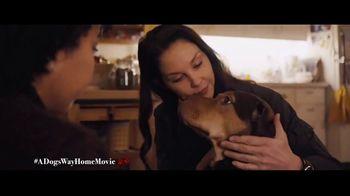 A Dog's Way Home - Alternate Trailer 31