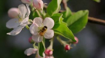 Angry Orchard Rosé TV Spot, 'Cider Lessons: Blossom Time' - Thumbnail 3