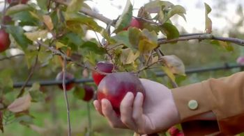 Angry Orchard Rosé TV Spot, 'Cider Lessons: Blossom Time' - Thumbnail 5