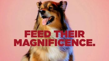 PETCO TV Spot, 'Royal Canin: Feed Their Magnificence' Song by Henry Bowers-Broadbent