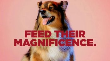 PETCO TV Spot, 'Royal Canin: Feed Their Magnificence' Song by Henry Bowers-Broadbent - Thumbnail 3