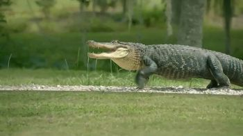 Popeyes Tenders & Biscuit TV Spot, 'Gators and Chicken: $3.99' - 2583 commercial airings