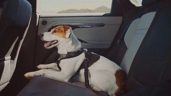 2020 Range Rover Evoque TV Spot, 'A Dog's Dream' [T1]