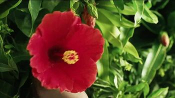 Pure Leaf Mango Hibiscus Herbal Ice Tea TV Spot, 'Blooming With Flavor' - Thumbnail 6