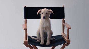 GEICO TV Spot, 'Animal Planet: Casting the Puppy Bowl' - Thumbnail 8