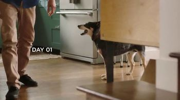 Bissell TV Spot, 'Fynn's Pet Adoption Story at Bissell Pet Foundation' - Thumbnail 5