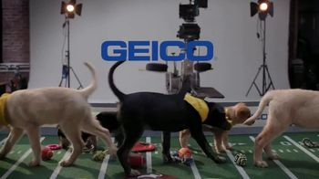 GEICO TV Spot, 'Animal Planet: Directing the Puppy Bowl Easy' - Thumbnail 7