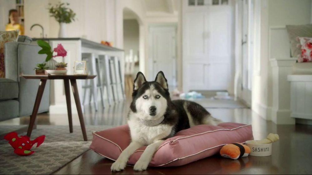 Wells Fargo TV Commercial, 'Designer Dog Collar' - Video