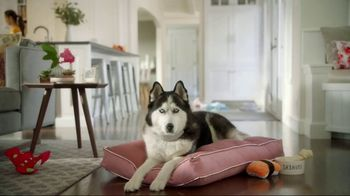 Wells Fargo TV Spot, 'Designer Dog Collar' - Thumbnail 1