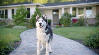 Wells Fargo TV Spot, 'Designer Dog Collar' - Thumbnail 3